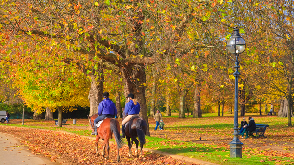 Hyde Park in Fall, Pawel Libera