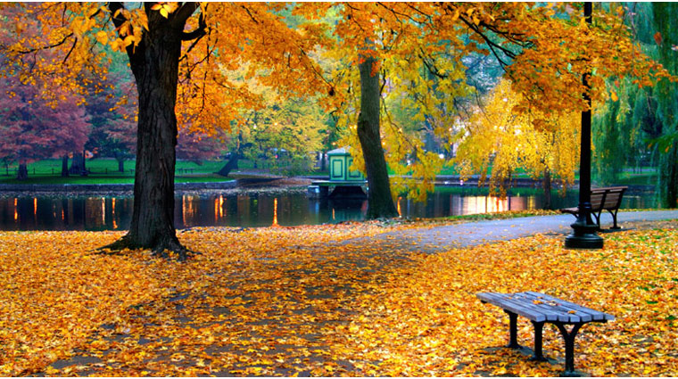 Autumn in Boston Common