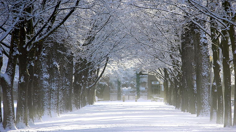 Winter Pathway in Boise Idaho