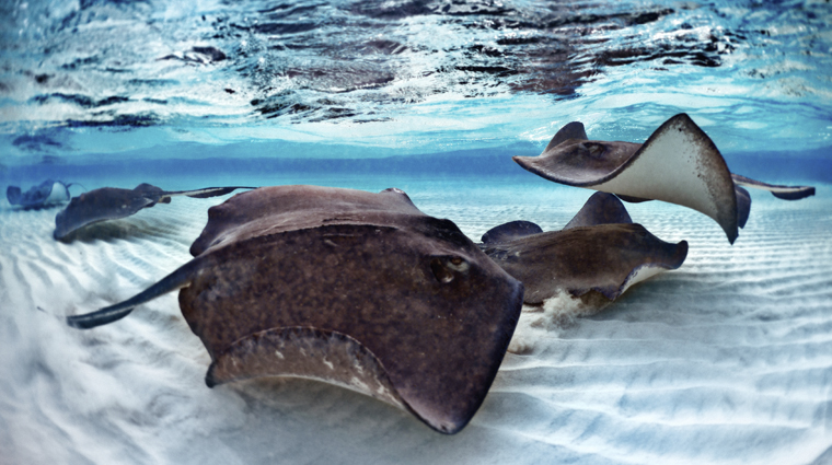 Stingrays on the Sandbar