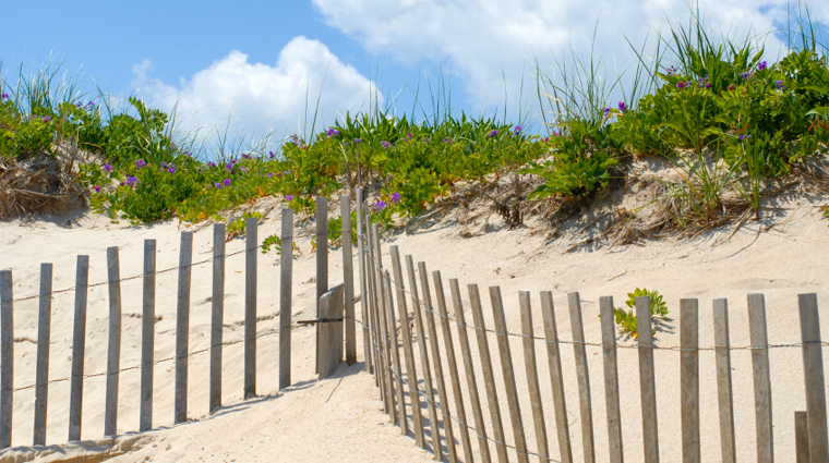 Fence at the Beach