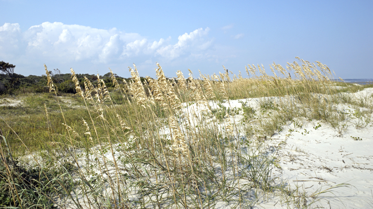 Dunes at St. Simons Island