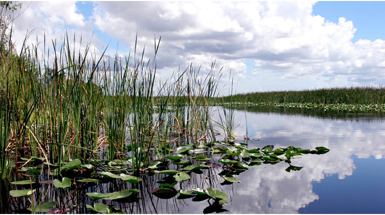 Everglades Habitat and Walk