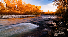 Boise River in Autumn